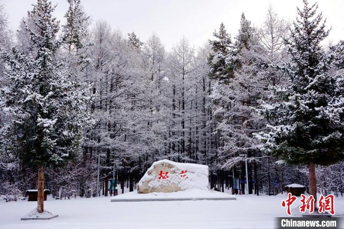 树枝上挂满了雪花。 王景阳 摄